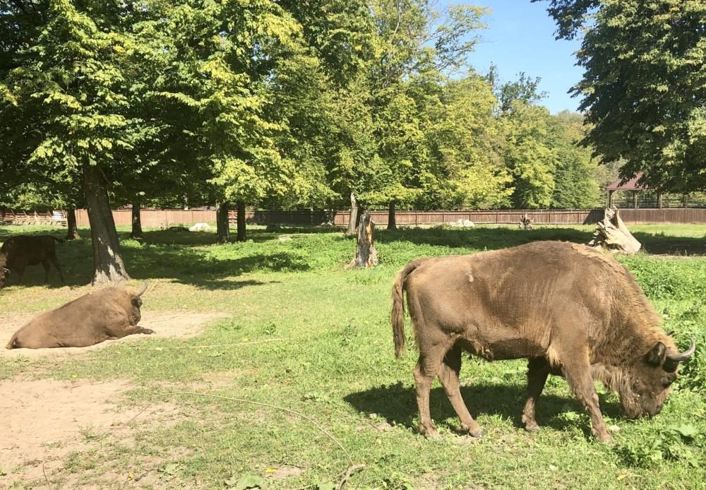 2019 08 26 Bialowieska Nationalpark mit Wisentzucht