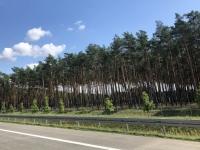 Bäume sehen unten wie kaputt aus