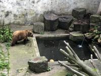 Burggraben mit Bären
