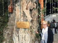 2019 09 30 Buchara Restaurant Labihouse 500 Jahre alter Baum