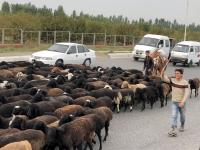 2019 10 05 Fahrt von Fergana Richtung Grenze Kirgisistan