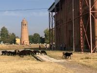 2019 10 06 Ösgön Minarett mit Mausoleum und Schafherde
