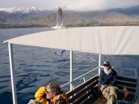 2019 10 08 Issyk Kul See Schifffahrt mit Mövenbegleitung