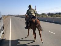 2019 10 10 Pferd auf der Autobahn