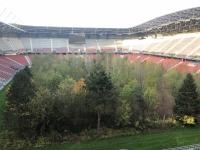 300 Bäume stehen am Spielfeld