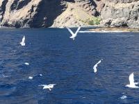 2019 10 22 Ausflug Walbeobachtung Möwenbegleitung