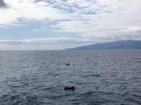 2019 10 22 Ausflug Walbeobachtung ca 50 Grindwale sehen wir