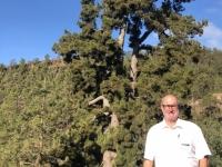 2019 10 23 Ausflug Teide kanarische Kiefer