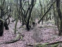 Spanien Nationalpark Garajonay Kanaren auf Insel La Gomera Kopfbild 2