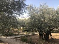 2019 11 26 Jerusalem Garten Gethsemane