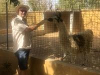 2020 02 11 Exotischer Park mit Lama