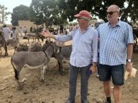 2020 02 12 Ngueniene Tiermarkt Eseln unter sich