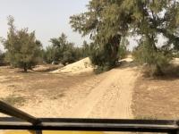 2020 02 13 Letzte Etappe der Rallye Dakar über die Sanddünen