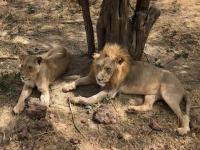 2020 02 15 Löwenreservat_waren schon auf uns