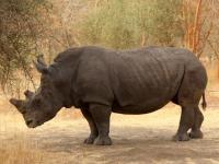 2020 02 15 Naturreservat Bandia Nashorn