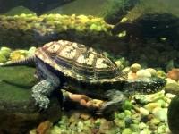 2020 03 06 Sealife Aquarium Schildkröte
