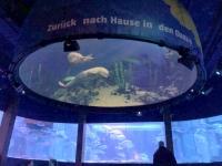 2020 03 06 Sealife Aquarium