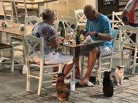 2020 09 08 Pigadia man isst nie alleine auf Karpathos