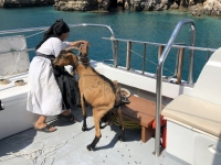 2020 09 09 Bootsfahrt nach Saria Oma mit Ziege fährt auch mit