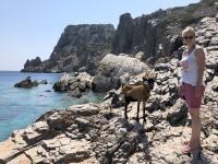 2020 09 09 Insel Saria Badebucht Palatia Ziege fährt dann auch mit zurück