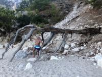 2020 09 13 Apella Beach Baumkulisse