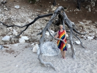 2020 09 13 Apella Beach Baumwurzel