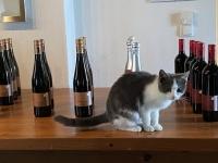 Katze Pauli mit dem Weinsortiment