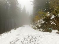 Forststrasse mit Schnee