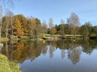2020 10 25 Gmünd Naturpark Blockheide Herbstspiegelung im Teich