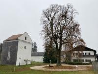 Schlosskapelle Mitterberg mit Kaiserlinde