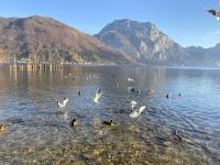 Fütterung von Enten und Möven