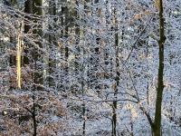 Raureif im Wald