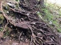 Natürliche Treppen