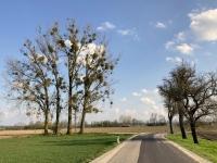 Wunderschöner Baum bei der Heimfahrt