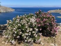 2021 05 29 Kalymnos Inselrundfahrt wunderschöne Botanik
