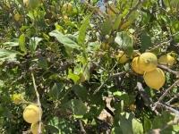 2021 05 29 Kalymnos Tal der Zitronen