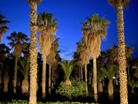 2021 05 31 Kos Hotel Cavo d Oro nächtlicher Palmengarten beim Abendessen