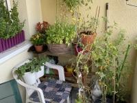 Blumen und Pflanzen auf Joes Balkon