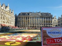 2016 08 15 Brüssel Grosser Markt Blumenteppich