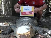 2019 02 13 Gambia Krokodilpool Katschikali