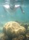 1999 09 13 Tobago Keys Schnorcheln vor der Insel