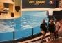 2001 10 09 Teneriffa Puerto de la Cruz Loro Park Delphinshow