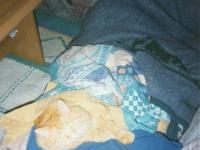 1999-03-15-hauskatze-garfield-1