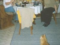 2003 12 24 Weihnachten in Würzberg mit Garfield