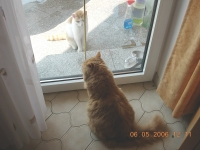 2006 05 06 Garfield bekommt Besuch