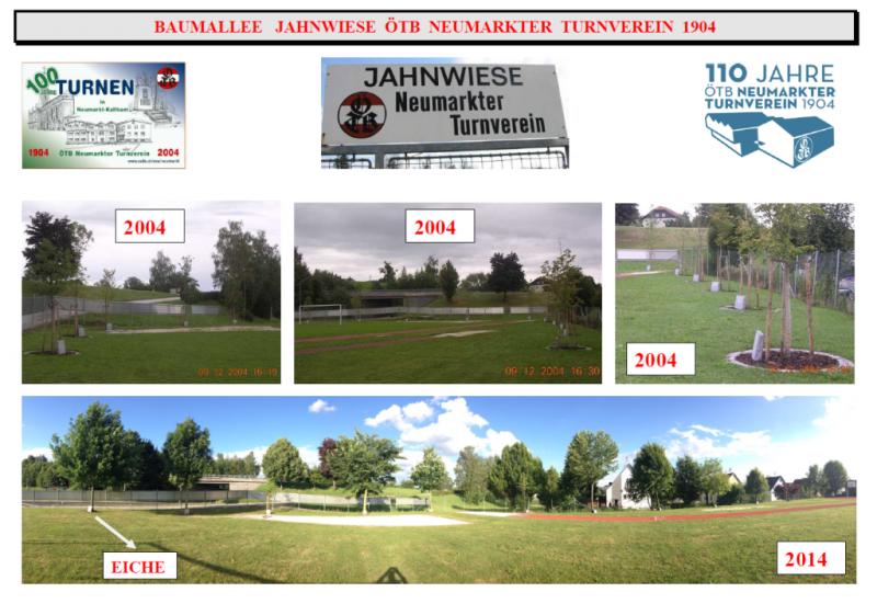2004 06 01 Eiche bei Baumallee Jahnwiese