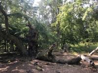 Deutschland Buchenurwälder in den Karpaten und alte Buchenwälder in Deutschland NP Kellerwald Kopfbild