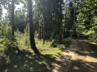 Belarus Weissrussland Nationalpark Belovezhskaya Pushcha  Bialowieza Kopfbild