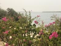 Senegal Nationalpark Delta du Saloum Kopfbild 2