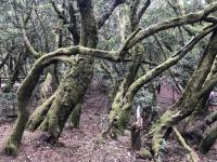 Spanien Nationalpark Garajonay Kanaren auf Insel La Gomera Kopfbild 1
